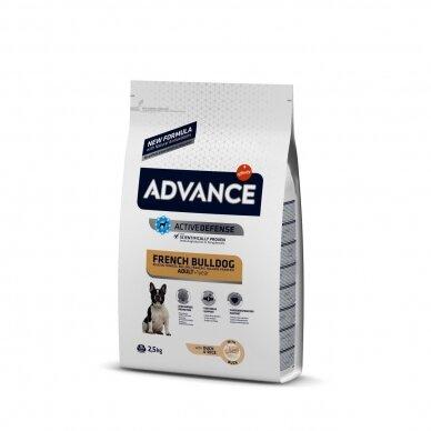 ADVANCE FRENCH BULLDOG 2