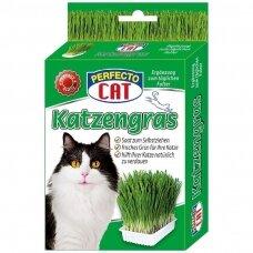 PERFECTO CAT KATZENGRAS 100 g